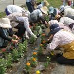花壇の苗植え